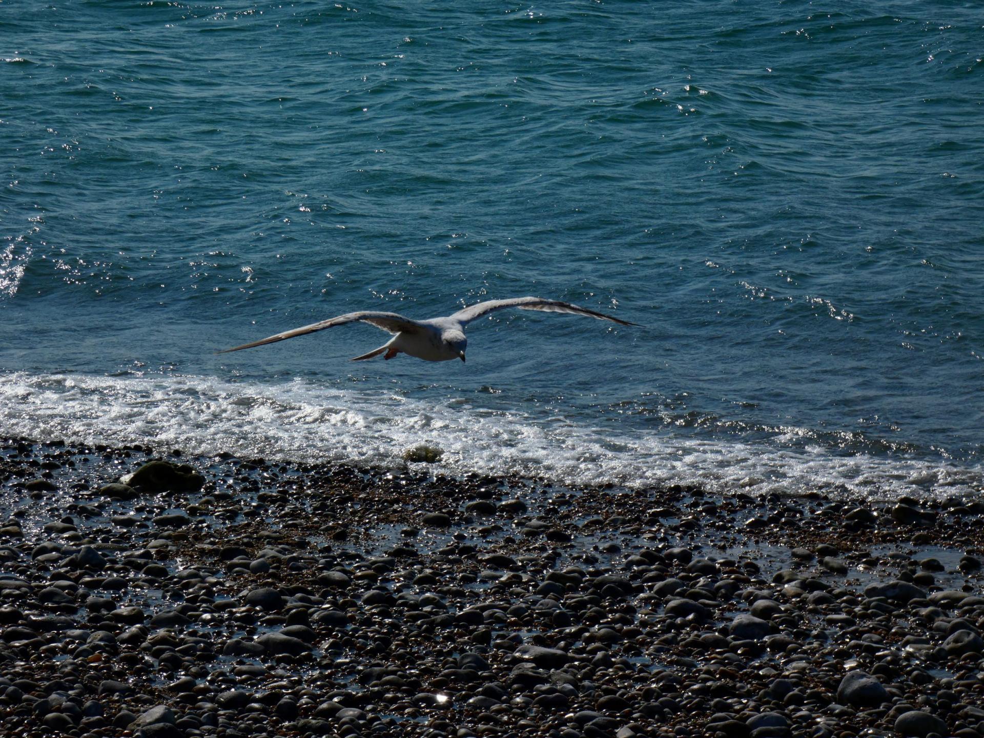 Oiseau la parenthese yoga